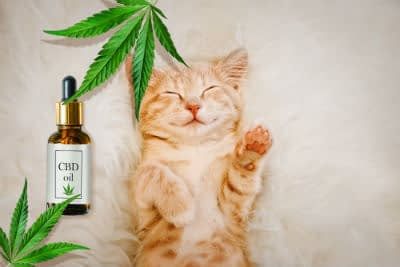 Here are the recent trends for keeping your cat healthy