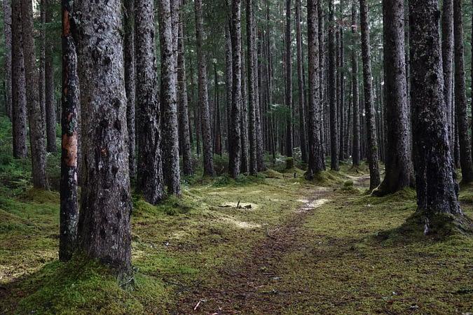 Biden to freeze Tongass timber sales, invest in other Southeast Alaska sectors - Alaska Public Media